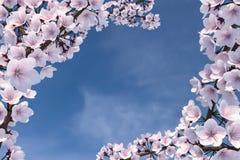τρισδιάστατη απεικόνιση του δέντρου ανθών κερασιών Στοκ Φωτογραφίες