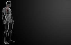 τρισδιάστατη απεικόνιση του οισοφάγου Στοκ φωτογραφίες με δικαίωμα ελεύθερης χρήσης
