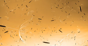 τρισδιάστατη απόδοση της φυσώντας σκιαγραφίας πικραλίδων Χτύπημα πετάγματος dandel διανυσματική απεικόνιση
