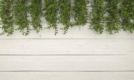 τρισδιάστατη βλάστηση κισσών απόδοσης στον άσπρο ξύλινο τοίχο Στοκ φωτογραφίες με δικαίωμα ελεύθερης χρήσης