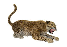 τρισδιάστατη λεοπάρδαλη γατών απόδοσης μεγάλη στο λευκό Στοκ Εικόνα