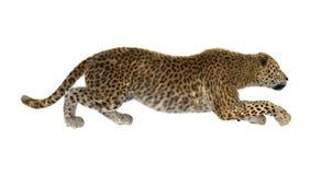 τρισδιάστατη λεοπάρδαλη γατών απόδοσης μεγάλη στο λευκό Στοκ Φωτογραφίες