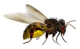 τρισδιάστατη μέλισσα Στοκ Εικόνες