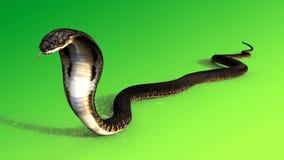 τρισδιάστατος βασιλιάς Cobra το παγκόσμιο ` s μακρύτερο δηλητηριώδες φίδι στο πράσινο υπόβαθρο, τρισδιάστατη απεικόνιση φιδιών co Στοκ Εικόνα