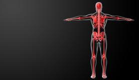 τρισδιάστατος κόκκινος σκελετός Στοκ φωτογραφία με δικαίωμα ελεύθερης χρήσης
