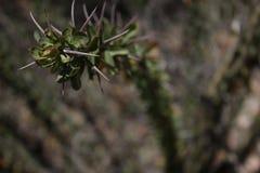 τρισδιάστατος κλάδος θάμνων ερήμων αγκαθιών Στοκ Φωτογραφία