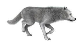 τρισδιάστατος πολικός λύκος απόδοσης στο λευκό Στοκ εικόνα με δικαίωμα ελεύθερης χρήσης