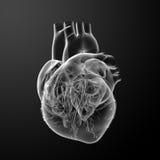 τρισδιάστατος δώστε την καρδιά Στοκ Εικόνες