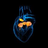 τρισδιάστατος δώστε τη βαλβίδα καρδιών Στοκ Εικόνες
