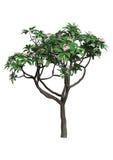 τρισδιάστατο δέντρο απόδοσης Plumeria στο λευκό Στοκ Εικόνες
