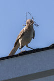 τρισδιάστατο ψαλίδισμα mockingbird βόρειο πέρα από το μονοπάτι που δίνει το λευκό σκιών Στοκ εικόνα με δικαίωμα ελεύθερης χρήσης