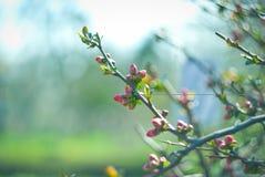 τρισδιάστατο όμορφο ανθίζοντας δέντρο εικόνας Στοκ Φωτογραφίες