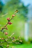 τρισδιάστατο όμορφο ανθίζοντας δέντρο εικόνας Στοκ Εικόνες
