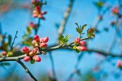 τρισδιάστατο όμορφο ανθίζοντας δέντρο εικόνας Στοκ εικόνες με δικαίωμα ελεύθερης χρήσης