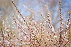 τρισδιάστατο όμορφο ανθίζοντας δέντρο εικόνας Στοκ φωτογραφία με δικαίωμα ελεύθερης χρήσης