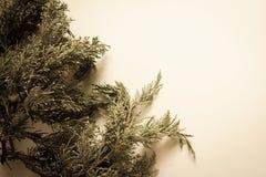 τρισδιάστατο όμορφο πεύκο τρία απεικόνισης αριθμού Χριστουγέννων διαστατικό πολύ Στοκ Φωτογραφίες