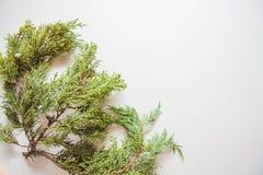 τρισδιάστατο όμορφο πεύκο τρία απεικόνισης αριθμού Χριστουγέννων διαστατικό πολύ Στοκ Εικόνες
