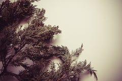 τρισδιάστατο όμορφο πεύκο τρία απεικόνισης αριθμού Χριστουγέννων διαστατικό πολύ Στοκ εικόνες με δικαίωμα ελεύθερης χρήσης