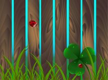 Τριφύλλι άνοιξη, ladybugs, χλόη στο ξύλινο καφετί υπόβαθρο φρακτών κήπων Ημέρα του ST Πάτρικ ` s, Άγιος, Πάτρικ, διακοπές, φύση,  διανυσματική απεικόνιση