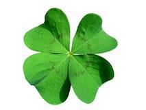 τριφύλλι τέσσερα με φύλλα Στοκ Εικόνες