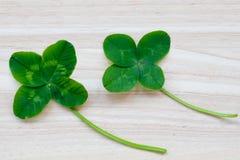 Τριφύλλι τέσσερις-φύλλων Ένα φυτό με 4 φύλλα Ένα σύμβολο της τύχης, happi Στοκ Φωτογραφία