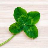 Τριφύλλι τέσσερις-φύλλων Ένα φυτό με 4 φύλλα Ένα σύμβολο της τύχης, happi Στοκ εικόνες με δικαίωμα ελεύθερης χρήσης