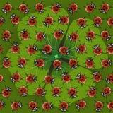 Τριφύλλι με το ladybug Στοκ Εικόνες