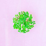 Τριφύλλι που συσσωρεύεται σε έναν κύκλο Ιρλανδικό σύμβολο Στοκ φωτογραφία με δικαίωμα ελεύθερης χρήσης