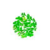 Τριφύλλι που συσσωρεύεται σε έναν κύκλο που απομονώνεται Ιρλανδικό σύμβολο Στοκ φωτογραφία με δικαίωμα ελεύθερης χρήσης