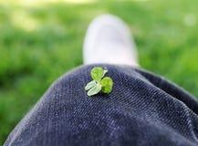 τριφύλλι τέσσερα με φύλλα Στοκ Φωτογραφία