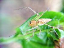 Τριχωτή αράχνη ποδιών Στοκ εικόνα με δικαίωμα ελεύθερης χρήσης