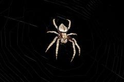 τριχωτή αράχνη Στοκ εικόνα με δικαίωμα ελεύθερης χρήσης