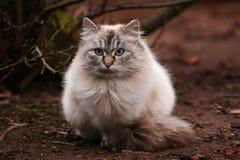 Τριχωτή γάτα στοκ φωτογραφία με δικαίωμα ελεύθερης χρήσης