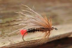 Τριχωτή μύγα ψαριών Στοκ Εικόνα