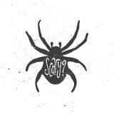 Τρομακτική εγγραφή στην αράχνη Στοκ Φωτογραφία