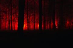 Τρομακτικό ομιχλώδες δάσος Στοκ Εικόνες
