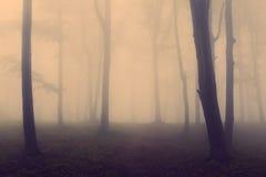 Τρομακτικό σκοτεινό δάσος με τη βαριά ομίχλη Στοκ Εικόνα
