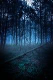 Τρομερό misty δάσος σκιαγραφιών στην αυγή στοκ εικόνες