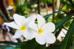 Τροπικά άγρια λουλούδια - Βραζιλία Στοκ φωτογραφία με δικαίωμα ελεύθερης χρήσης