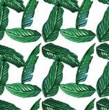Τροπικά άνευ ραφής φύλλα φοινικών σχεδίων Watercolor Στοκ Εικόνα