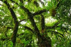 Τροπικά δάση Στοκ Εικόνες