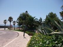 Τροπικά δέντρα στην ακτή του Κασκάις σε ένα ηλιόλουστο απόγευμα (Πορτογαλία) Στοκ φωτογραφία με δικαίωμα ελεύθερης χρήσης