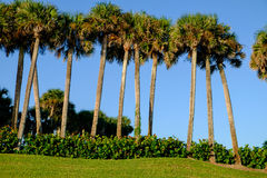 Τροπικά δέντρα φοινικών και καρύδων ενάντια στον όμορφο μπλε ουρανό στο θόριο στοκ εικόνες με δικαίωμα ελεύθερης χρήσης