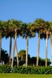 Τροπικά δέντρα φοινικών και καρύδων ενάντια στον όμορφο μπλε ουρανό στο θόριο στοκ φωτογραφίες