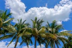 Τροπικά δέντρα φοινικών και καρύδων ενάντια στον όμορφο μπλε ουρανό στο θόριο στοκ εικόνα