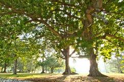 Τροπικά δέντρα Στοκ Φωτογραφία