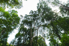 Τροπικά δασικά δέντρα Στοκ φωτογραφίες με δικαίωμα ελεύθερης χρήσης