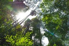 Τροπικά δασικά δέντρα Στοκ Εικόνα