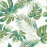 Τροπικά εξωτικά λουλούδια και φυτά με τα πράσινα φύλλα του φοίνικα Στοκ Εικόνες