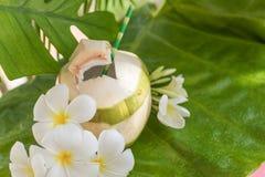 Τροπικά εξωτικά ποτό και λουλούδια φρούτων καρύδων Στοκ Εικόνα